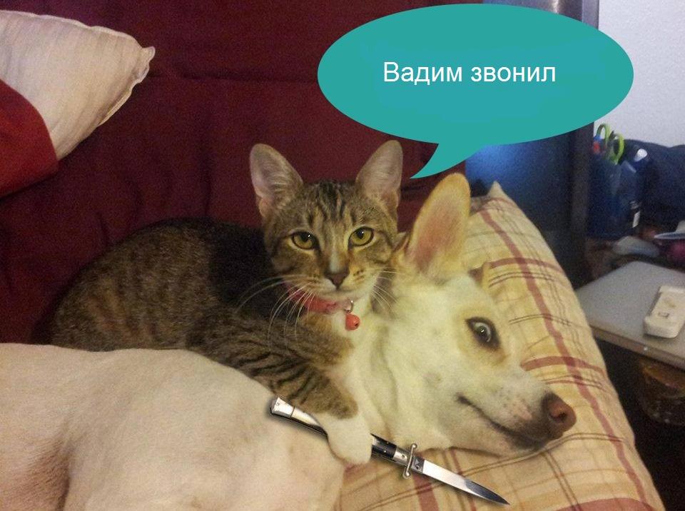 https://zxdemos.ru/uploads/images/93/e3cb8a2bb5cf35dc54e5680f3a223366.jpg